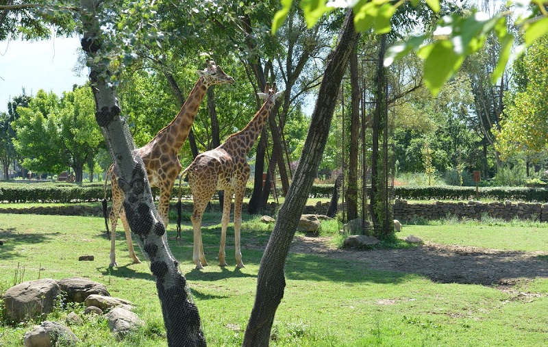 Бурса местный зоопарк