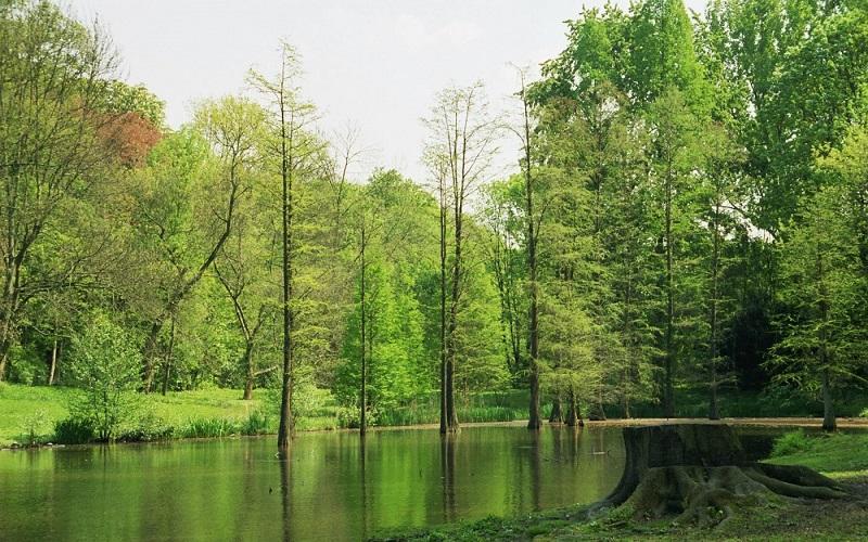 ромберг-парк дортмунд