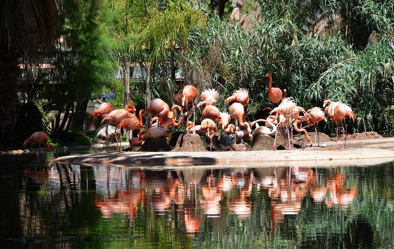 зоопарк барселона