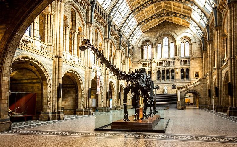 лондонский музей естествознания