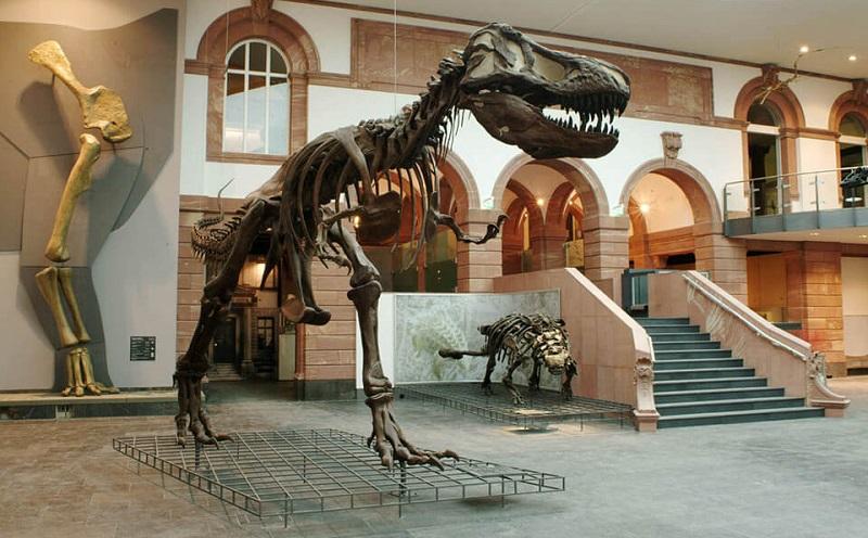 зенкенбергский музей естествознания