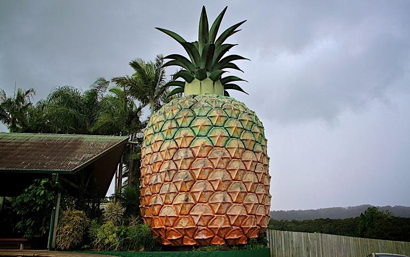большой ананас австралия