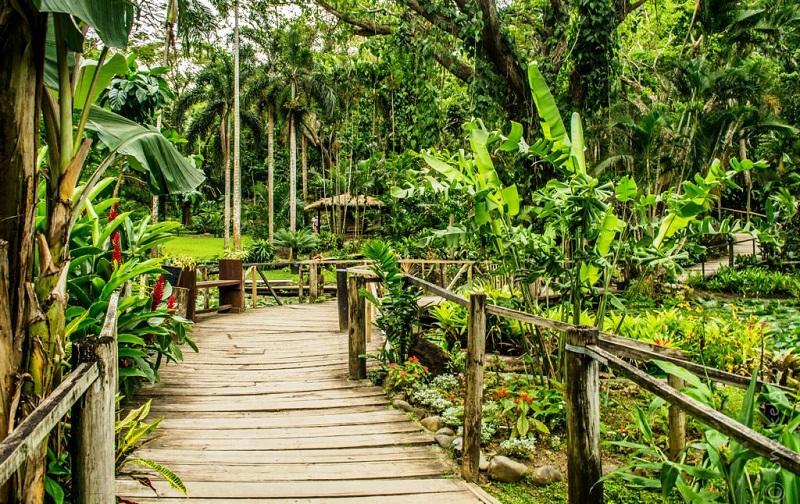 ботанический сад спящего гиганта