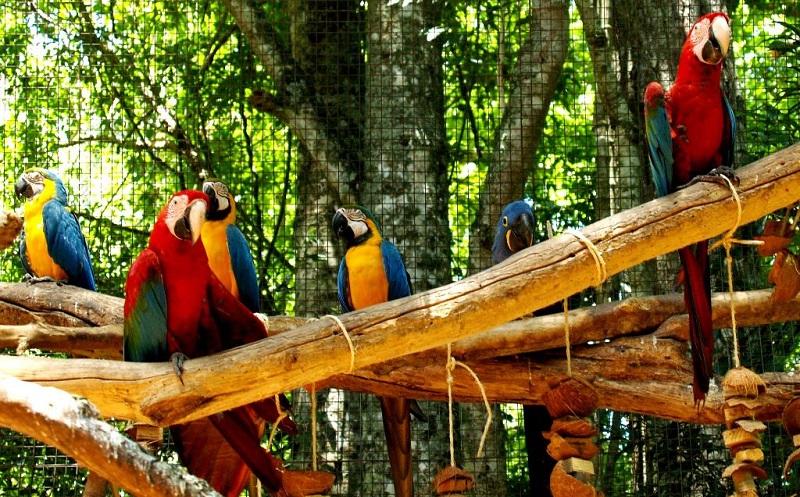 парк птиц в фос-ду-игуасу