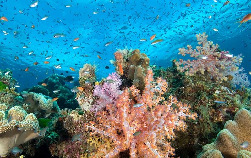 риф большая астролябия