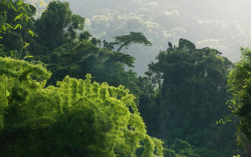 влажные тропические леса ацинананы