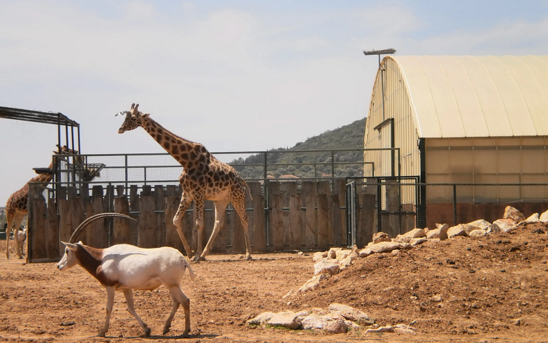 зоопарк аттика в афинах