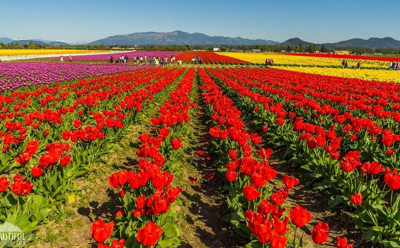 долина роз болгария