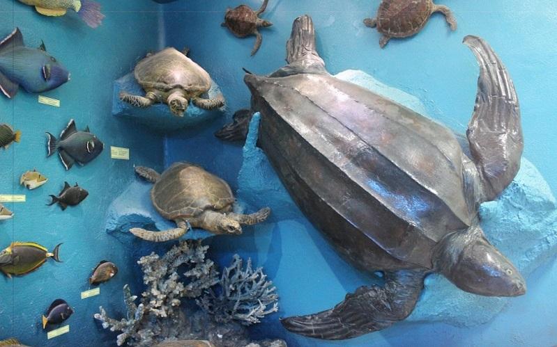 музей морской биологии в хургаде
