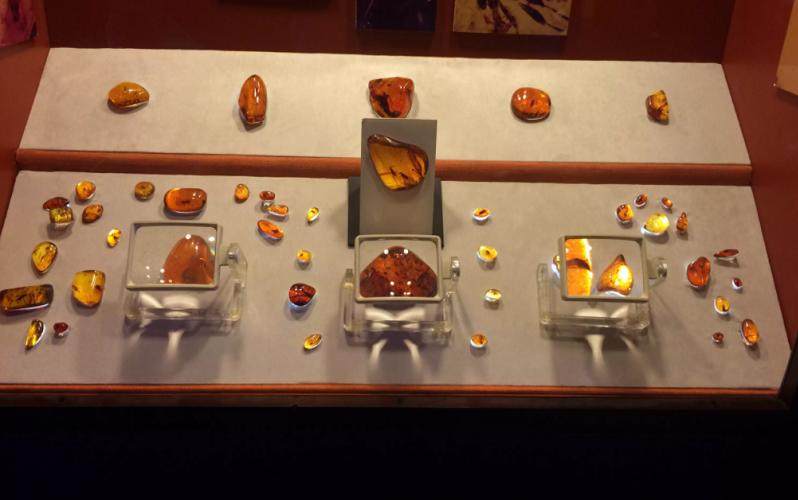 музей янтаря доминикана
