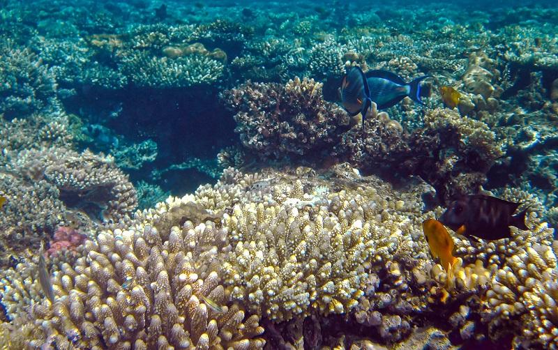риф гота абу-рамада