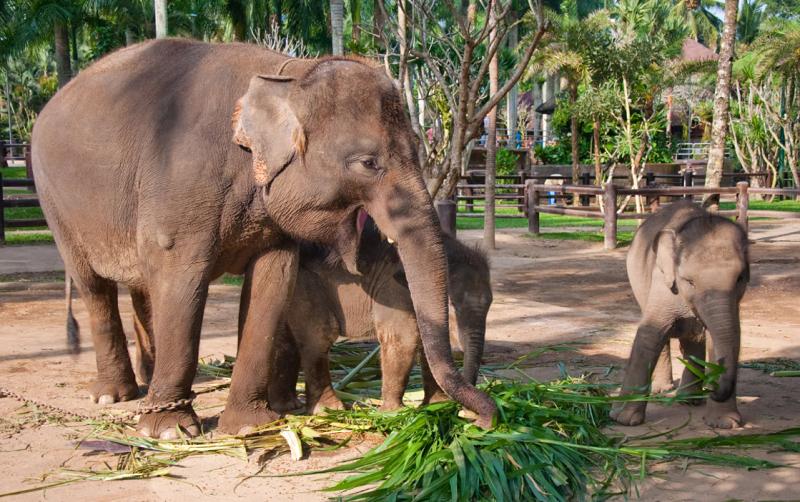 слоновий парк бали
