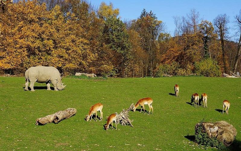 зальцбургский зоопарк