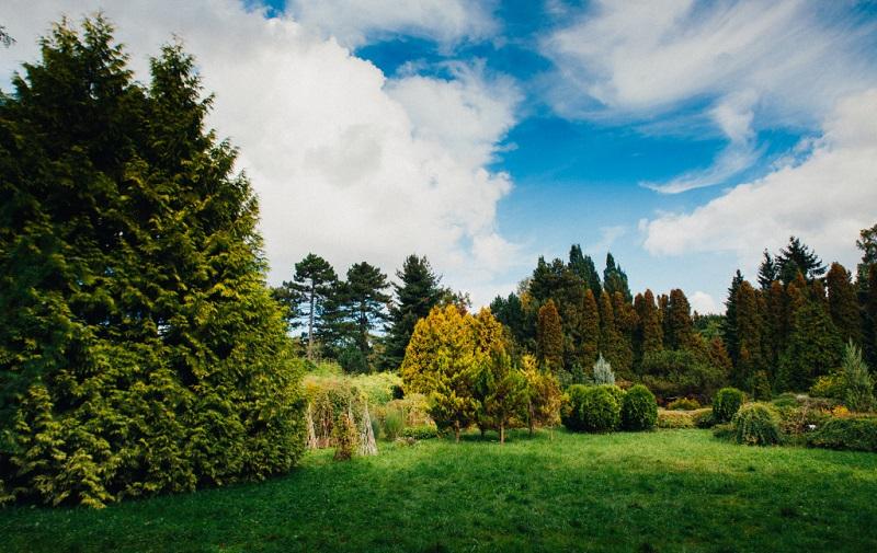 ботанический сад бфу имени иммануила канта