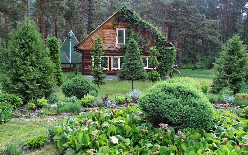 ботанический сад горный алтай