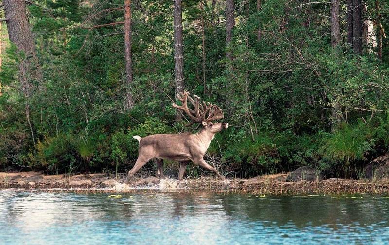 калевальский национальный парк