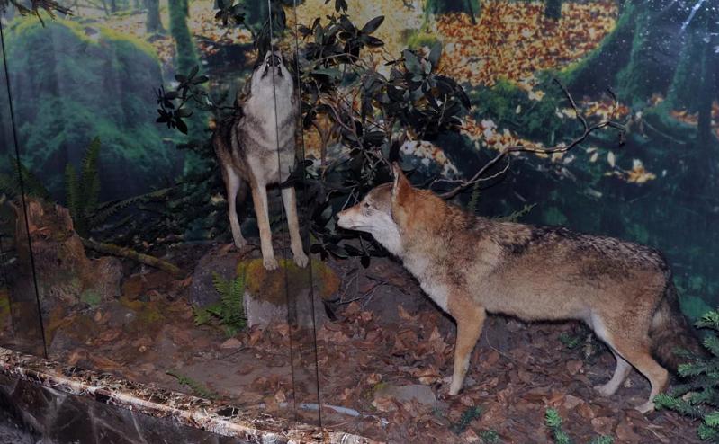 музей природы кавказского заповедника