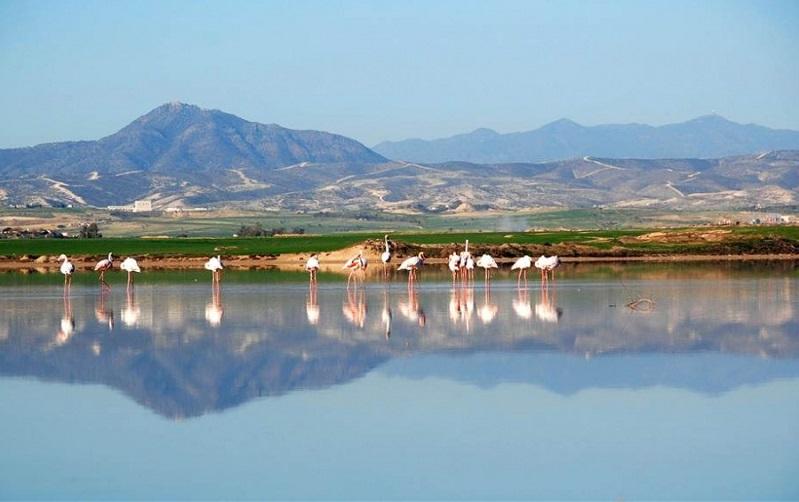 солёное озеро ларнака