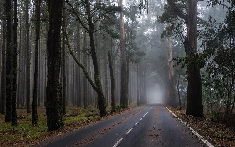 лес эсперанса на тенерифе