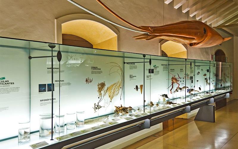 музей природы и человека тенерифе